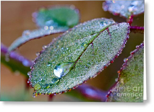 Water Drop Greeting Card by Jo