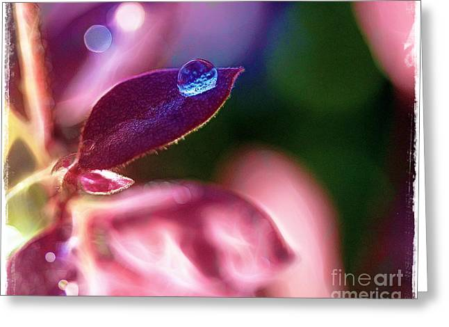 Water Drop Greeting Card by Judi Bagwell