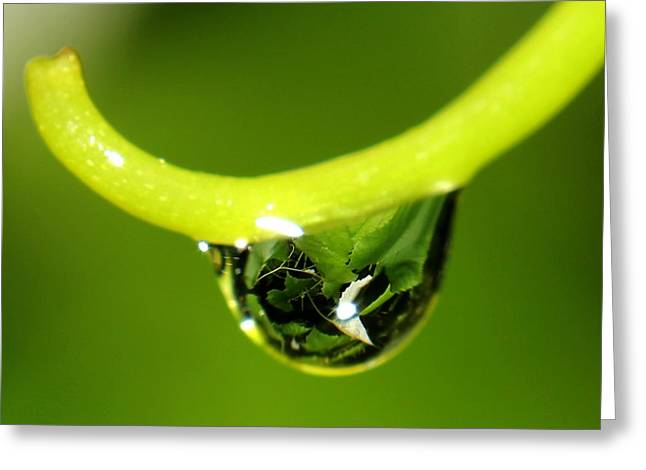 Water Droplet On Grapevine Greeting Card