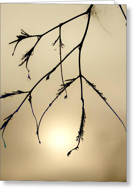 Water Droplets Greeting Card by Jim Painter