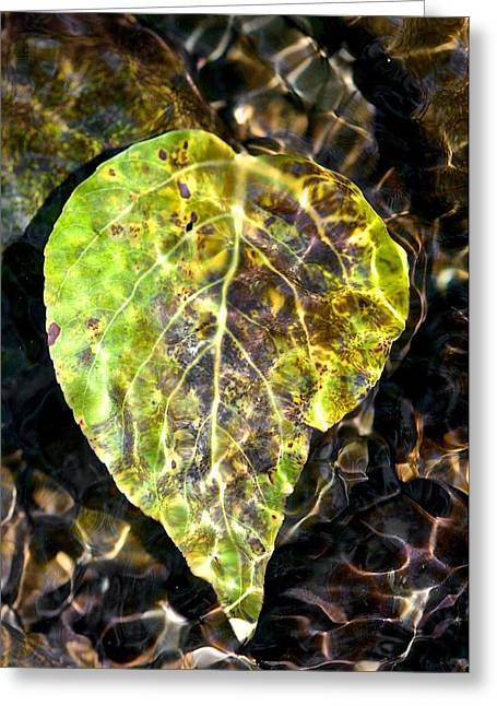 Greeting Card featuring the photograph Water Leaf by Scott Holmes
