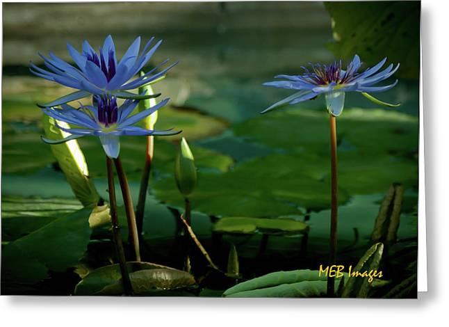 Water Lillies Greeting Card by Margaret Buchanan