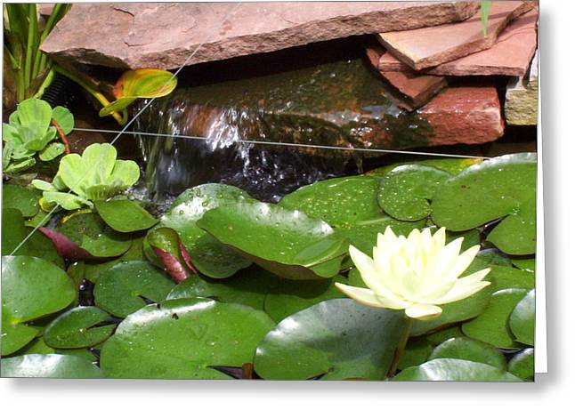 Greeting Card featuring the photograph Water Lillies by Richard Willows