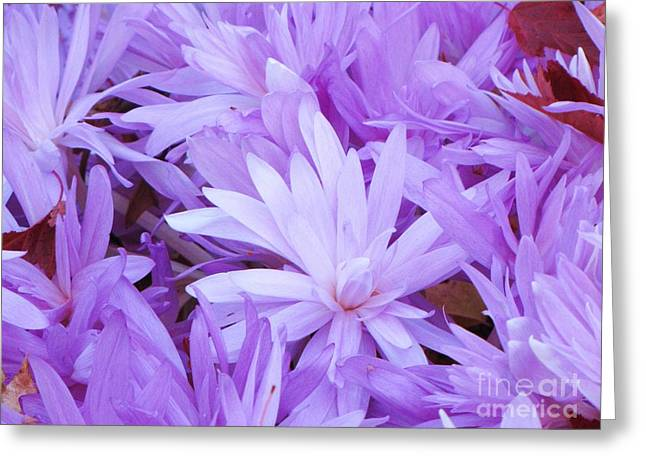 Greeting Card featuring the photograph Water Lilly Crocus by Michele Penner