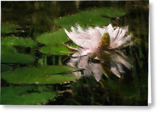 Water Lilly Greeting Card by Heiko Mahr