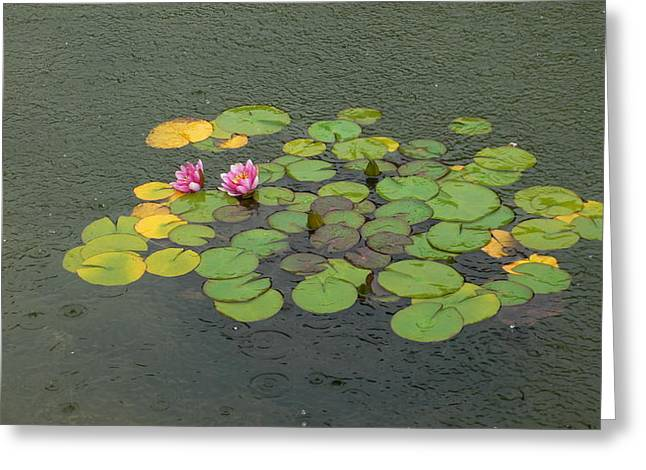 Water Lilly In Rain -1 Greeting Card by Muhammad Hammad Khan
