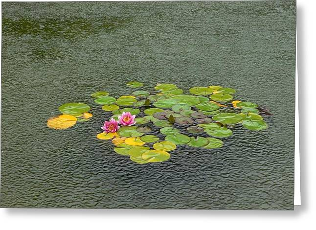Water Lilly In Rain -2 Greeting Card by Muhammad Hammad Khan