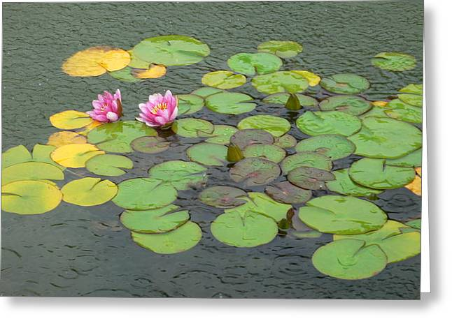 Water Lilly In Rain -3 Greeting Card by Muhammad Hammad Khan