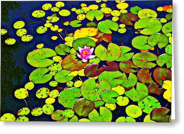 Water Lilly Greeting Card by Randall Weidner