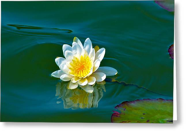 Water Lily 4 Greeting Card by Julie Palencia