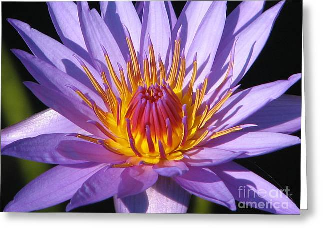 Water Lily 6 Greeting Card by Eva Kaufman