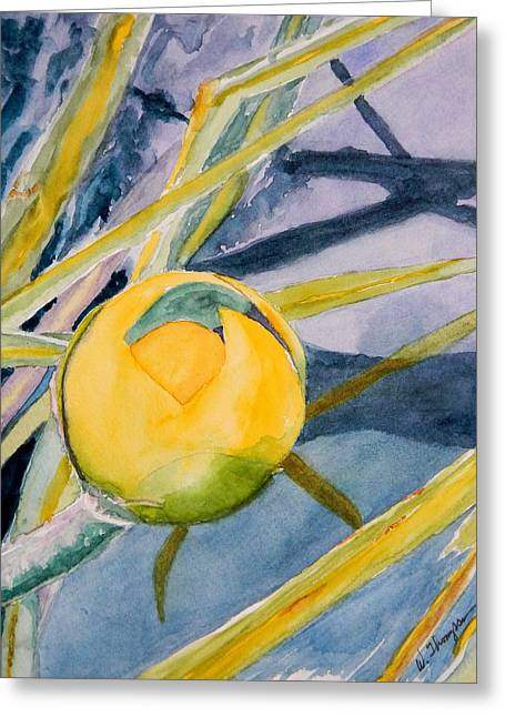 Water Lily Habitat Greeting Card by Warren Thompson