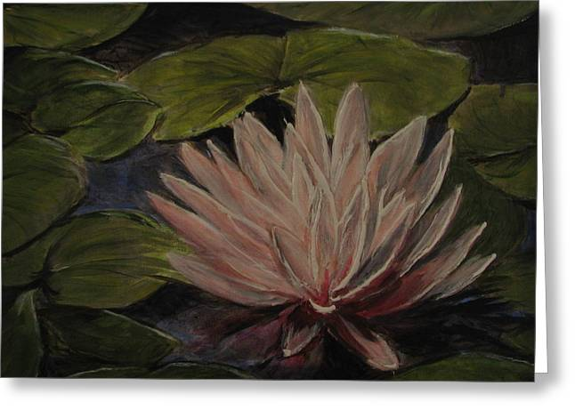 Water Lily Greeting Card by Sherry Robinson