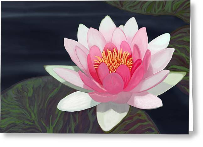 Water Lily Greeting Card by Tim Stringer