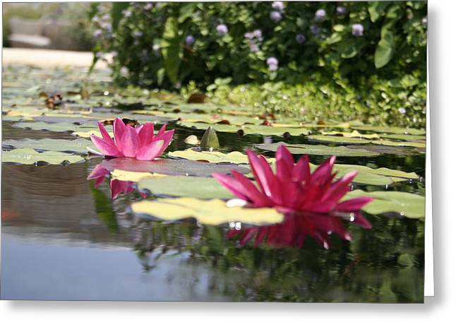 Water Reflections Greeting Card by Rosanne Nitti