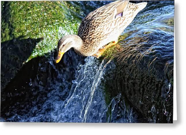 Water Slide Greeting Card
