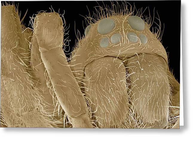 Water Spider, Sem Greeting Card