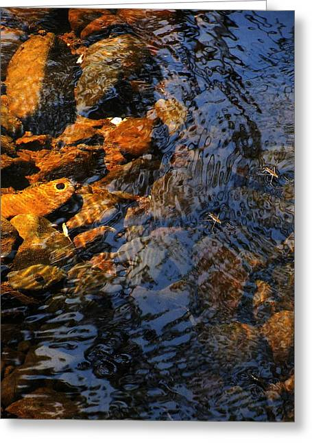 Water Striders At Klootchy Greeting Card by Steven A Bash
