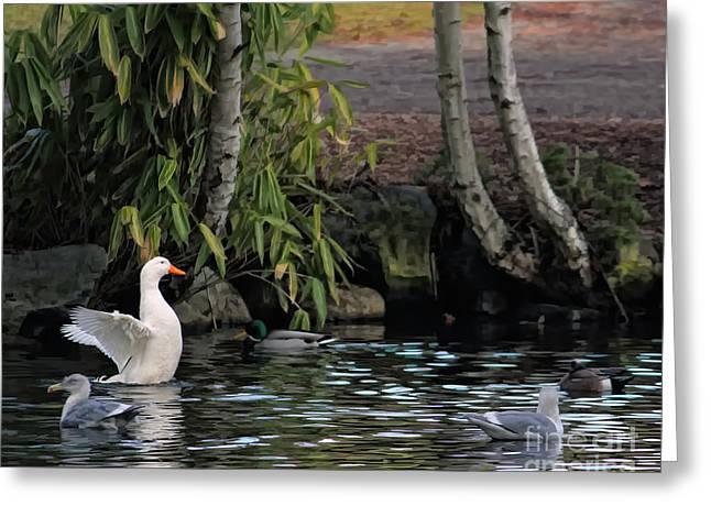 Waterbirds Greeting Card by Billie-Jo Miller