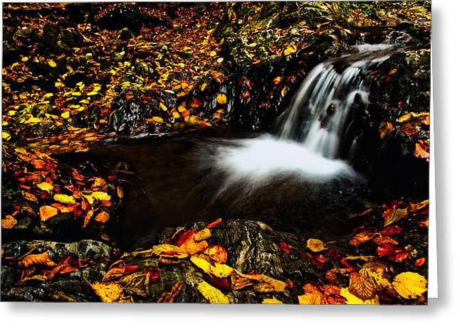 Waterfall Greeting Card by Irinel Cirlanaru