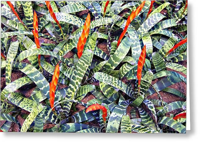 Watermelon Leaves Greeting Card by Douglas Barnard