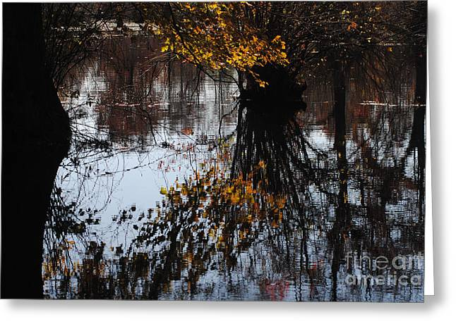 Greeting Card featuring the photograph Waterpainting by Tamera James