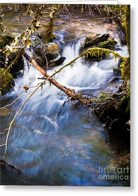 Waters Creek - Spring 2011 Greeting Card