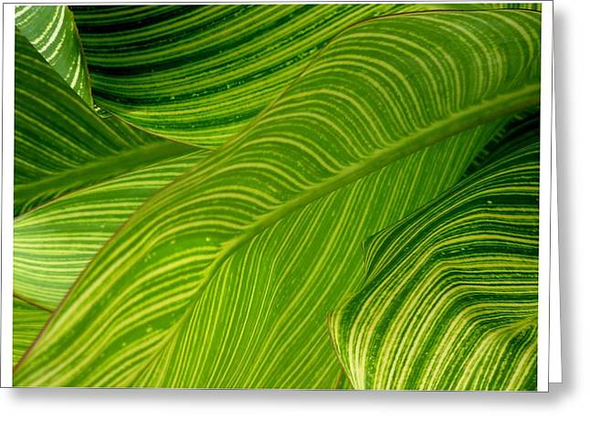 Waves Of Green And Yellow Greeting Card