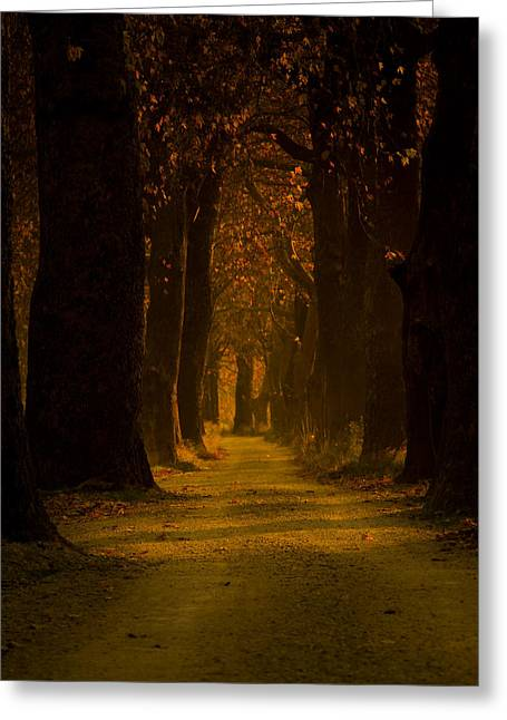 Way In The Forest Greeting Card by Zafer GUDER