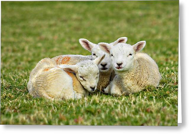 We Are Three Greeting Card by Meirion Matthias