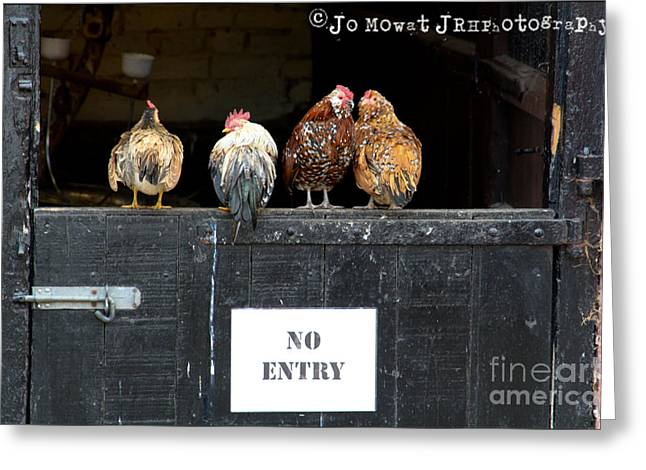 We Don't Give A Cluck Greeting Card by Jo