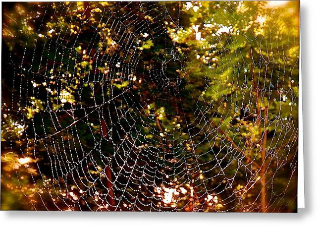 Web Illusion Greeting Card by Gloria Warren