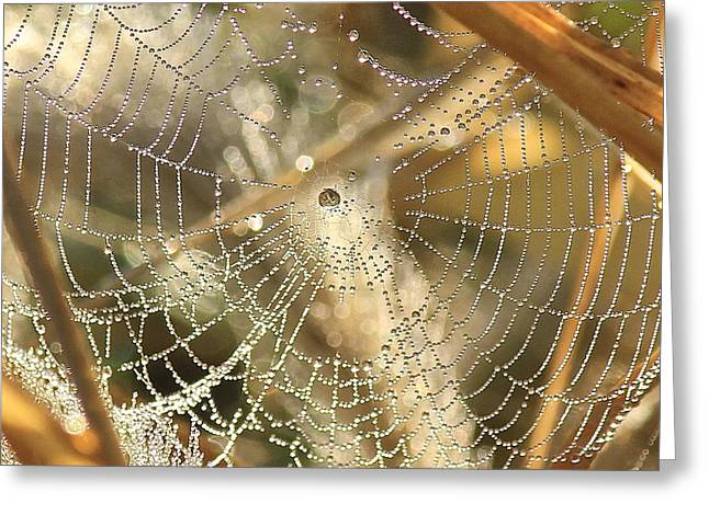 Web Of Jewels Greeting Card by Penny Meyers