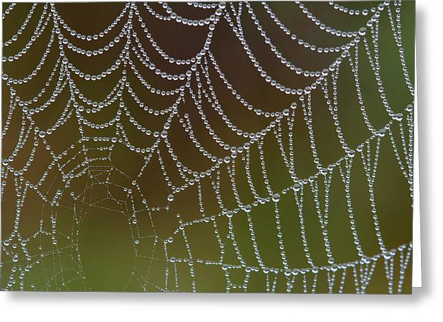 Web With Dew Greeting Card