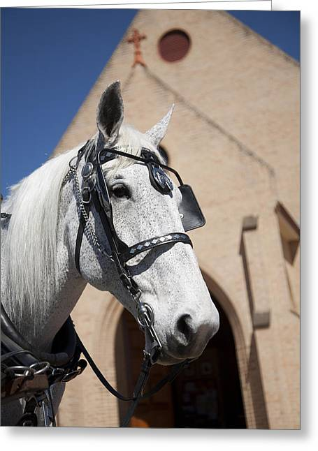 Greeting Card featuring the photograph Wedding Horse  by Carole Hinding