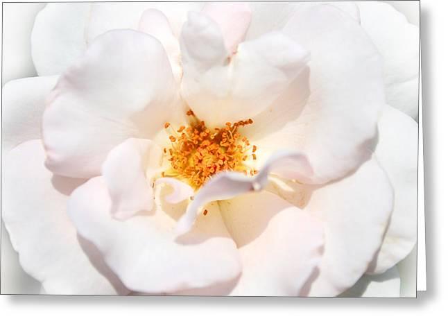 Wedding White Rose Greeting Card