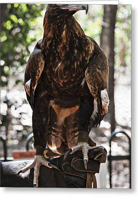Wedge Tailed Eagle With Oil Painting Effect Greeting Card by Zoe Ferrie