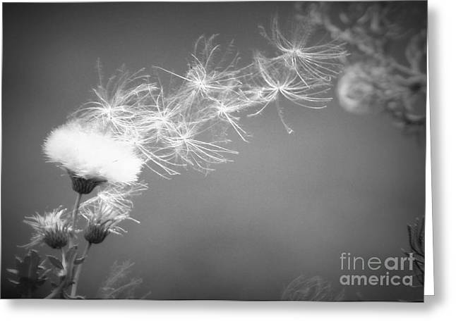Greeting Card featuring the photograph Weed In The Wind by Deniece Platt