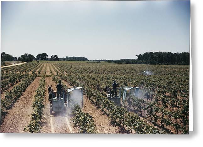 Welchs Grape Vineyard Covers 250 Acres Greeting Card by Willard Culver