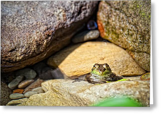 Welcome To My Rock Greeting Card by Kathleen Nelson
