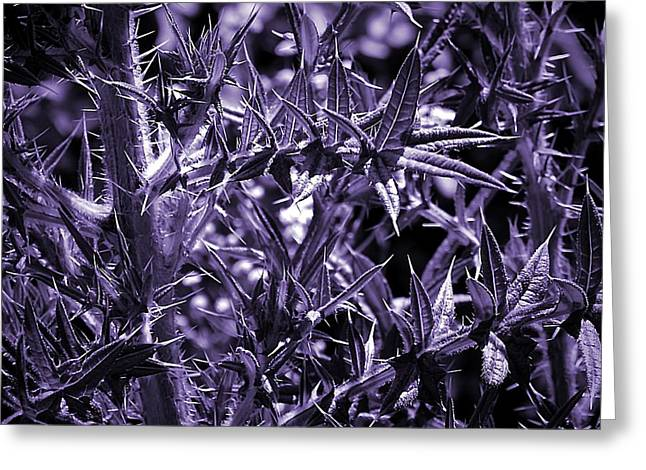 Welcome To The Purple Jungle Greeting Card by Beth Akerman