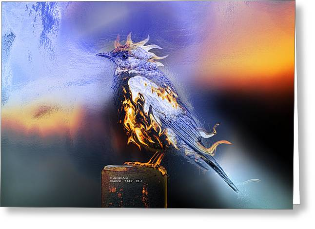 Western Bluebird Fire And Ice Greeting Card by James Ahn