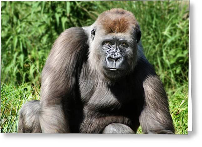 Western Lowland Gorilla Female Greeting Card by Julie L Hoddinott