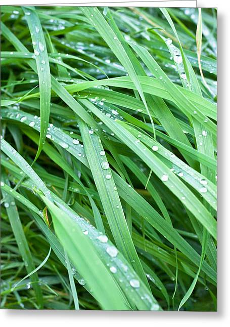 Wet Grass Greeting Card by Tom Gowanlock