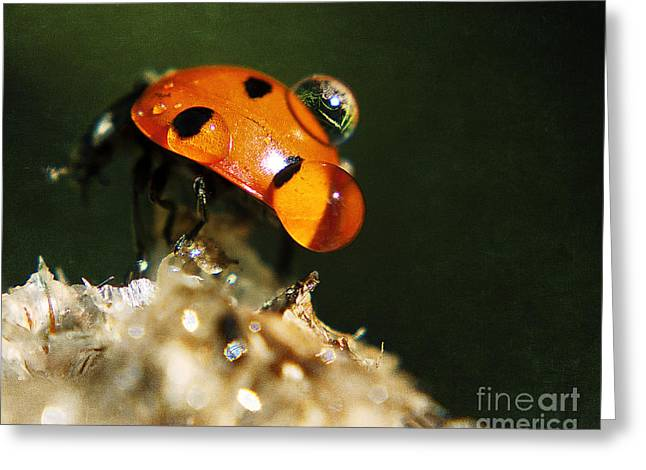 Wet Lady Bug Greeting Card