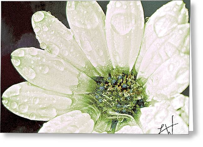 Greeting Card featuring the digital art Wet Petals by Artist and Photographer Laura Wrede