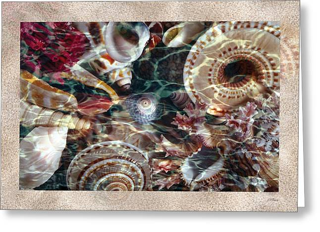 Wet Shells Sand Card Greeting Card