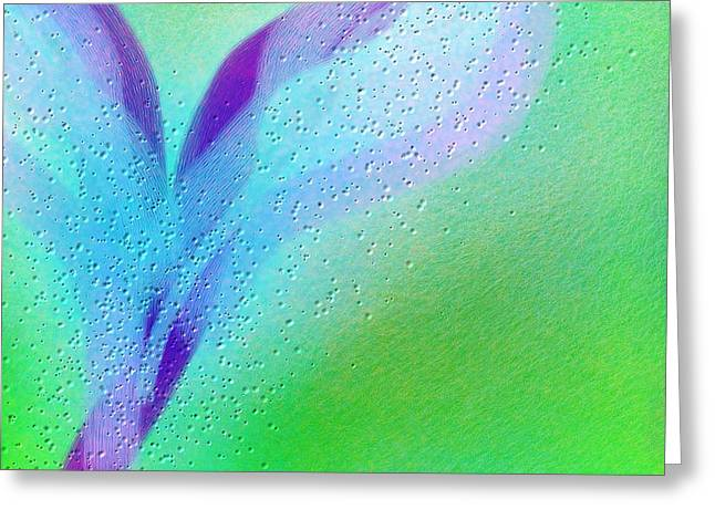 Wet Wings Greeting Card by Rosana Ortiz
