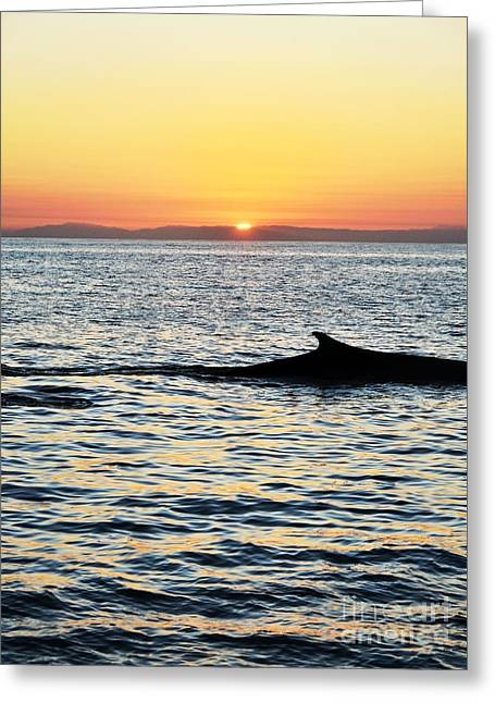 Whale At Sunset Greeting Card by Timothy OLeary