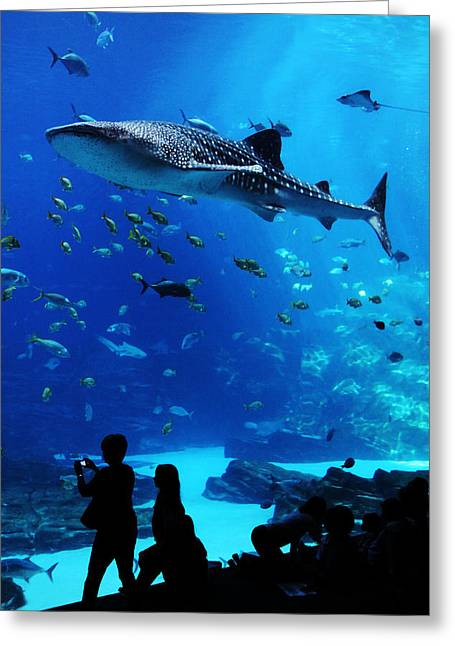 Whale Shark Fly-by Greeting Card by Brian M Lumley